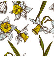 seamless pattern with hand drawn colored daffodil vector image