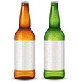 beer bottle blank package design vector image