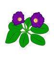 gloxinia flower vector image vector image