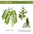 Herbal robinia pseudoacacia or black locust branch vector image vector image