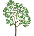 isolated cartoon tree vector image