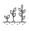 plant growth stages from sprout to flower vector image vector image
