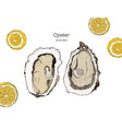 fresh oysters luxury seafood of vector image vector image