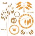 Oat vector image vector image