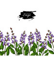 sage drawing border isolated plant with vector image vector image
