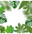 decorative frame leaves of tropical plants vector image