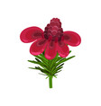 flat icon of gorgeous torch ginger with vector image vector image
