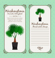 vintage label with washingtonia plant vector image vector image