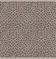 beige and brown leopard fashion seamless pattern vector image vector image
