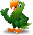 cartoon happy parrot giving thumb up vector image vector image