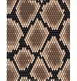 Seamless pattern of snake skin vector image