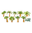 palm high and small trunk trees set color vector image vector image