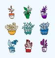 bright icon set of housplants in pots vector image vector image