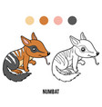 coloring book numbat vector image vector image
