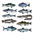 fish seafood sketch set with sea ocean animal vector image vector image