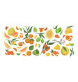 various citrus colorful fruit set hand drawn vector image