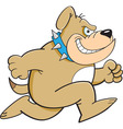 Cartoon Running Bulldog vector image vector image