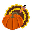 funny peligrimm with a pumpkin for thanksgiving vector image