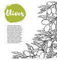 olives flyer template with border from olive vector image vector image