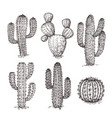 sketch cactus hand drawn desert cactuses vintage vector image vector image