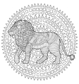Adult coloring page for antistress with lion vector image