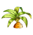 low bottle palm tropical tree color vector image vector image
