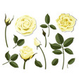 set yellow rose flower parts vector image vector image