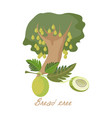 tropical plants with leaves breadfruit tree vector image