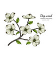 white dogwood flower and leaf drawing with line vector image