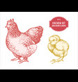 collection hand drawn pastel chicken vector image