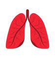 human lungs human respiratory system internal vector image