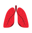 human lungs respiratory system internal vector image