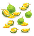 set of icons of a durian vector image