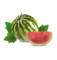 watermelon with slices vector image vector image