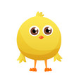 cute little cartoon chick standing isolated on a vector image vector image