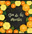 decorative background with orange marigolds vector image