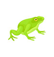 flat icon of cute frog with bright green vector image vector image
