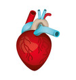 heart with veins isolated icon vector image