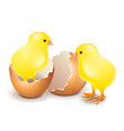 yellow chicken in egg isolated on white vector image vector image
