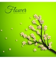 floral branch background concept vector image vector image