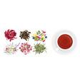 herbal tea set in flat cartoon vector image vector image