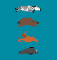 sleeping animals set 2 zebra and bear walrus and vector image vector image