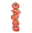 tomato or solanum lycopersicum vector image vector image