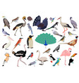 cute bird collection set with flat color style vector image