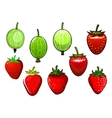 Fresh red strawberry and green gooseberry vector image vector image