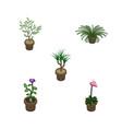isometric houseplant set of fern plant grower vector image vector image