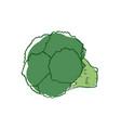 ripe broccoli isolated icon vector image vector image