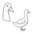 set of goose icons isolated on white background vector image vector image