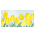 yellow decorative tulip floral header template vector image