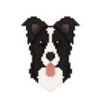 border collie dog head in pixel art style vector image vector image